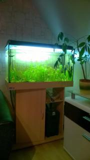 126 l Aquarium