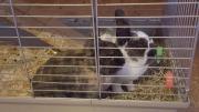 2 Kaninchen an