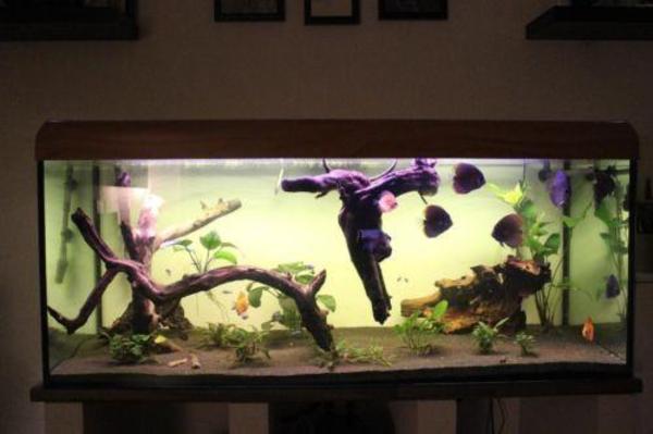 500 liter aquarium in bochum fische aquaristik kaufen und verkaufen ber private kleinanzeigen. Black Bedroom Furniture Sets. Home Design Ideas