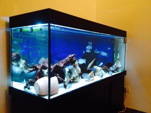 500l aquarium neu und gebraucht kaufen bei. Black Bedroom Furniture Sets. Home Design Ideas