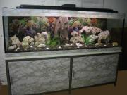 540 Liter Aquarium 180cm x 50cm x 60cm Aquaristik: Aquarium. Verkaufe ein Wunderschönen ca. 180cm x 50cm x 60cm 540 Liter Aquarium mit Untergestell, Abdeckung Beleuchtung. und auch die ... 300,- D-71522Backnang Heute, 17:18 Uhr, Backnang - 540 Liter Aquarium 180cm x 50cm x 60cm Aquaristik: Aquarium. Verkaufe ein Wunderschönen ca. 180cm x 50cm x 60cm 540 Liter Aquarium mit Untergestell, Abdeckung Beleuchtung. und auch die