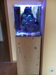 60 Liter Seewasseraquarium