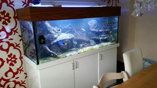 600 liter meerwasser aquarium becken komplett mit fischen. Black Bedroom Furniture Sets. Home Design Ideas