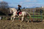 Andalusier - PREs, Pferde