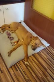 anhänglicher Junghund