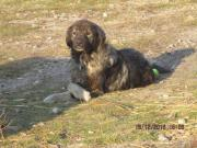 Apollo - 4j,kinderlieb,hunde/katzenverträgl,anhängl,ruhig - sucht endgültiges Zuhause/Pflegestelle Mischling erwachsen Apollo ist ein lieber, freundlicher, gutmütiger Rüde, der sich mit Kinder, Hunde und Katzen verträgt. Sein Wesen ist ruhig und ... 290,- - Apollo - 4j,kinderlieb,hunde/katzenverträgl,anhängl,ruhig - sucht endgültiges Zuhause/Pflegestelle Mischling erwachsen Apollo ist ein lieber, freundlicher, gutmütiger Rüde, der sich mit Kinder, Hunde und Katzen verträgt. Sein Wesen ist ruhig und