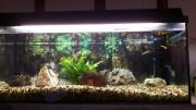 Aquarium 100cm 40cm
