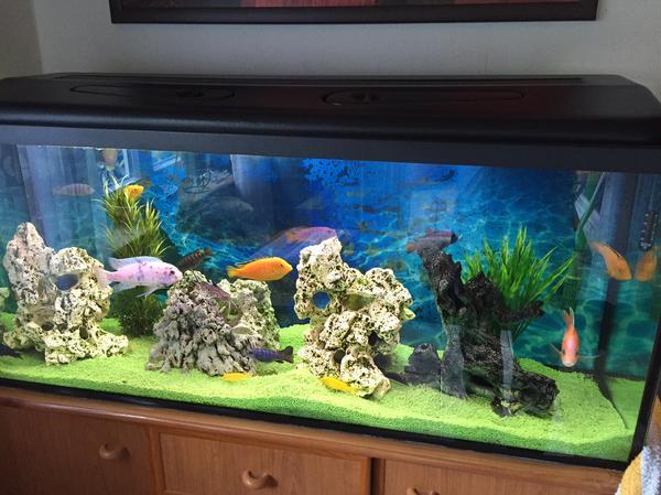 aquarium aussenfilter neu und gebraucht kaufen bei. Black Bedroom Furniture Sets. Home Design Ideas
