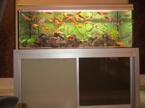 aquarium abzugeben in ha loch fische aquaristik kaufen. Black Bedroom Furniture Sets. Home Design Ideas