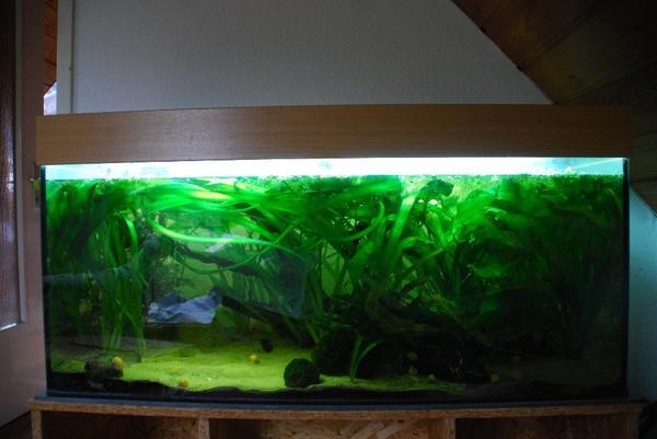 aquarium aufl sung juwel 200l eheim professionel ii pflanzen in bielefeld fische. Black Bedroom Furniture Sets. Home Design Ideas