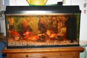 Aquarium ca 100-