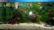 Aquarium e-heim