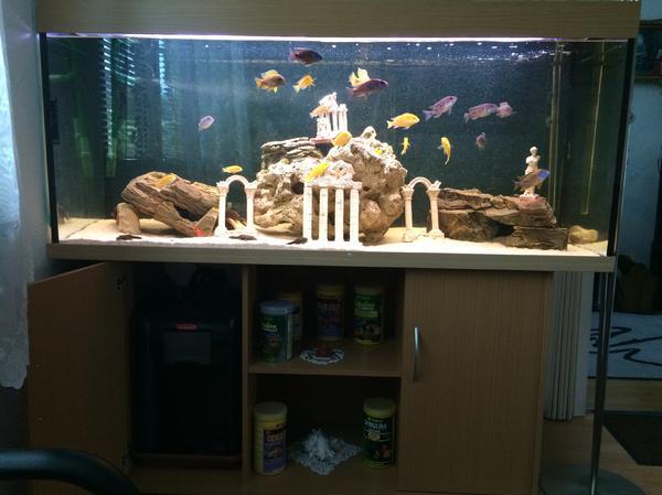 aquarium fische in magstadt fische aquaristik kaufen. Black Bedroom Furniture Sets. Home Design Ideas