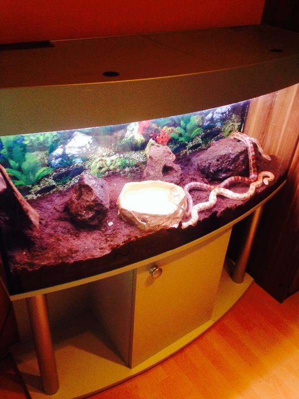Aquarium Als Terrarium Verwenden : Terrarium abdeckung kleinanzeigen aquarium fische