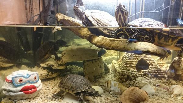 Aquarium mit alle zubeh r und 4 wasserschildkr ten in for Aquarium fische im teich