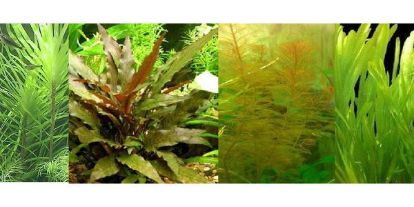 Aquarium pflanzen versand m glich wasserschildkr ten in for Aquarium versand
