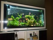 Aquarium Raumteiler TOP