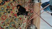 Baby Katzen