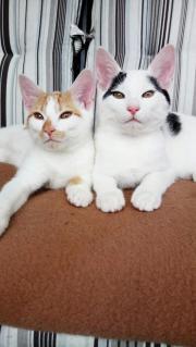 Balu und Lilly