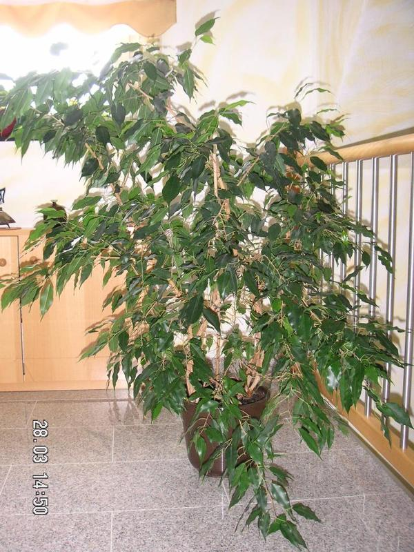 pflanzen b ume str ucher pflanzen garten bochum gebraucht kaufen. Black Bedroom Furniture Sets. Home Design Ideas