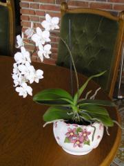 Blumentopf, Keramik, Italien