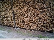 Brennholz Buche zvk.