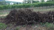 Brennholz, Rebknorzen Wurzelenden
