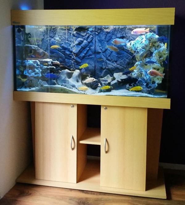 eheim mp aquarium 320l komplett mit malawisee buntbarsche in berlin fische aquaristik. Black Bedroom Furniture Sets. Home Design Ideas