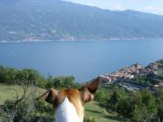 Gardasee, schöne Ferienwohnung