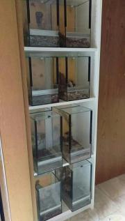 Glas Terrarium mehrere