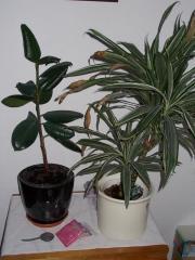 Grünpflanzen abzugeben