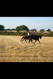 Hallo liebe Pferdebesitzer :)
