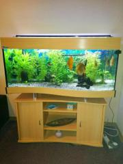 Hochwertige Aquarium mit