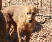 Janet, Tierschutzhund aus