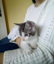 Junge Katze in