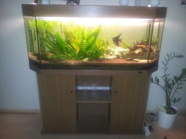 juwel 240 liter aquarium in weinheim fische aquaristik. Black Bedroom Furniture Sets. Home Design Ideas