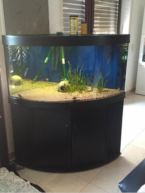 juwel trigon 350 viel zubeh r in malsch fische aquaristik kaufen und verkaufen ber private. Black Bedroom Furniture Sets. Home Design Ideas