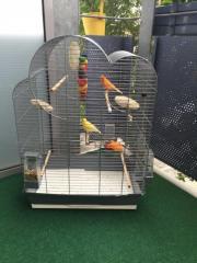 Kanarienvögel inkl. Käfig