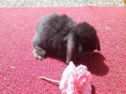 Kaninchen abzugeben auch