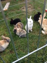 Kaninchen Baby zuverkaufen