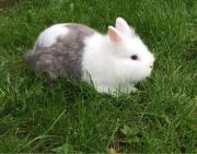 Kaninchen Damen verschiedenen
