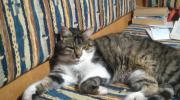 Katze in Schwarzach