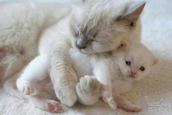 Katzenbabys Gesucht