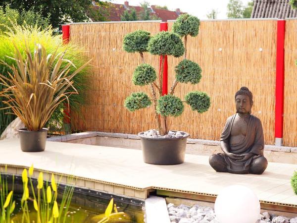 kiefer formgeh lze bonsai japanischer garten kiesgarten. Black Bedroom Furniture Sets. Home Design Ideas