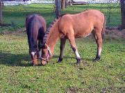 KindernZeitmitPferdenschenken#