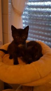 Kitten in allerbeste