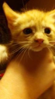 Kleine Katzenbabys zum