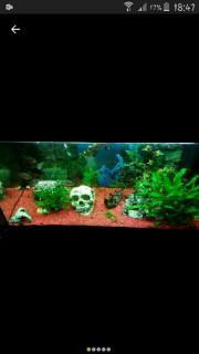 komplettes aquarium 120l