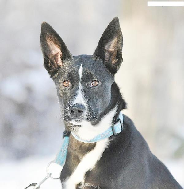 Labrador Sch 228 Ferhund Mischling 11 Monate H 252 Ndin Hund Mix In Vaihingen Hunde Kaufen Und