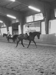 Leidenschaftliche Reiterin sucht